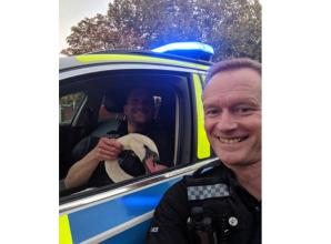 Police rescue 'dazed' swan from M4