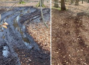 Quadbike riders tear up fence and paths in Burnham Beeches