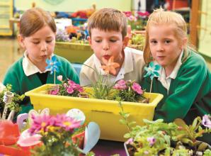 Green-fingered students build mini gardens at Wessex Primary School