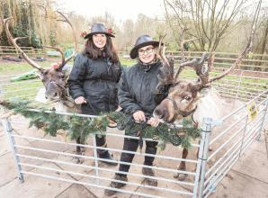 Thousands enjoy Christmas Fair at Dinton Pastures on Saturday