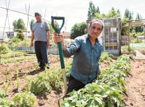Allotments hit by multiple thefts