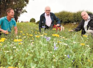 Wildflowers brighten up Cookham landscape